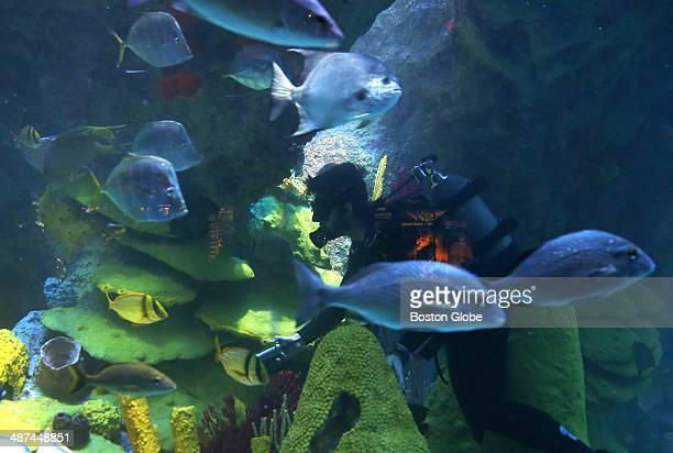 Love is in the air at the New England Aquarium thanks to its newly renovated Giant Ocean Tank In the months since the renovation was completed the...