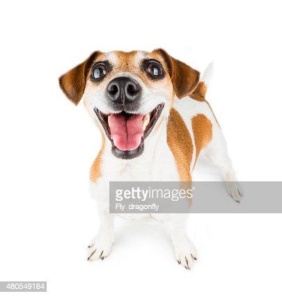 Love life dog : Stock Photo