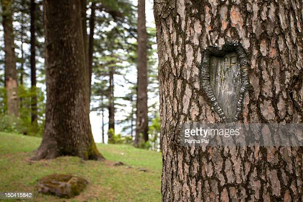 Love sign in Trees at Patnitop,Kashmir
