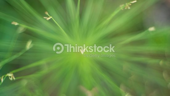 Love Symbol From Egyptian Papyrus Sedge Plant Stock Photo | Thinkstock