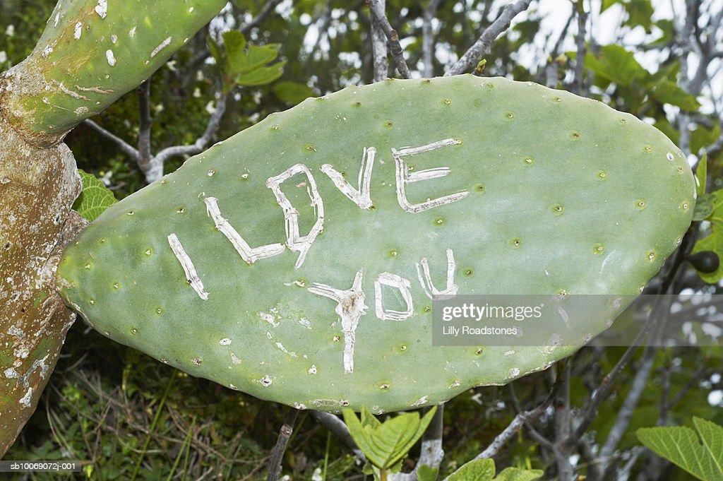 I Love You written on cactus leaf, close-up : Stock Photo
