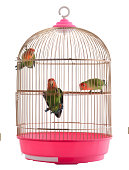 lovebird in a cage on a white background