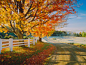 A lovely autumn foliage on a dirt road in Vermont