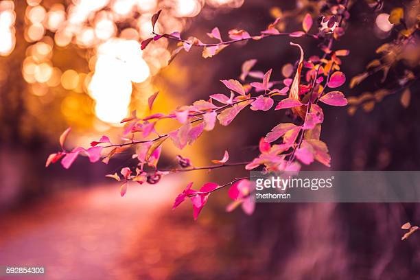 Lovely autumn leaves and bokeh
