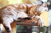Animals or pets concept : Lovely cat sleeping in the room, soft focus