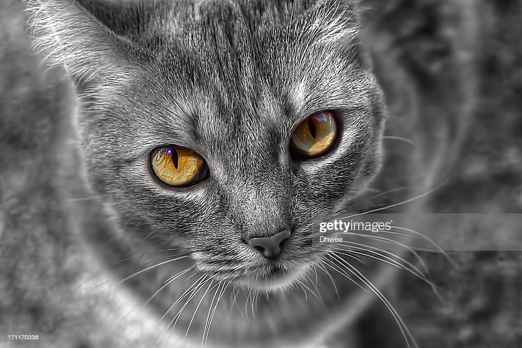 Lovely Cat's Eyes in Selective Colourization, HDR : Stock Photo