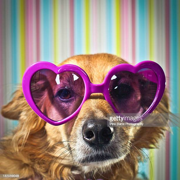 Lovely dog with heart shaped sunglasses