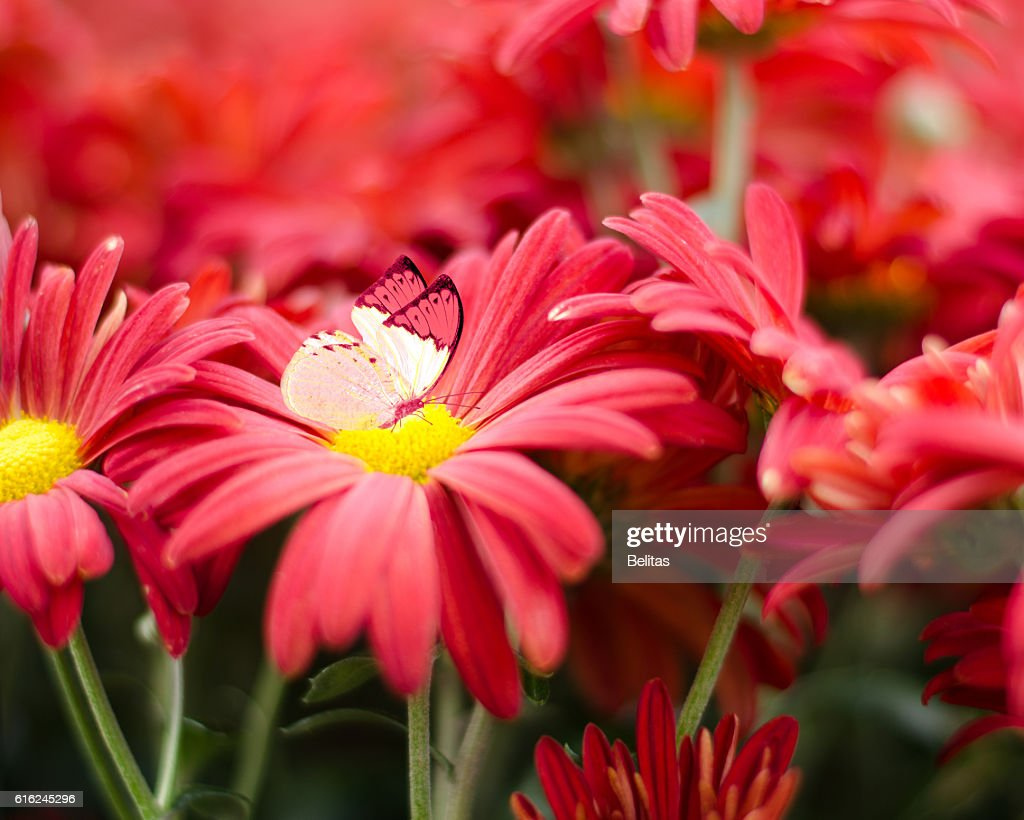 lovely flowers as background and butterfly : Stock Photo