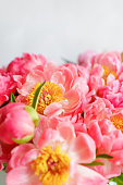 Lovely flowers in glass vase. Beautiful bouquet of peonies sort of coral charm. Floral composition, scene, daylight