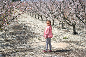 Lovely little girl standing in a grove of fruit trees in Cieza in the Murcia region. Peach, plum and nectarine trees. Spain