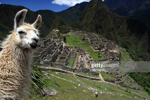 Lovely Llama and Macchu Picchu
