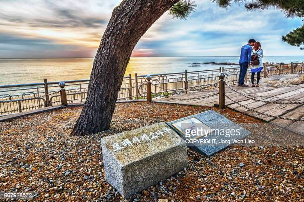 Lovers by the pine tree which was famous with the famous drama