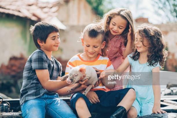 Loving children with baby piglet