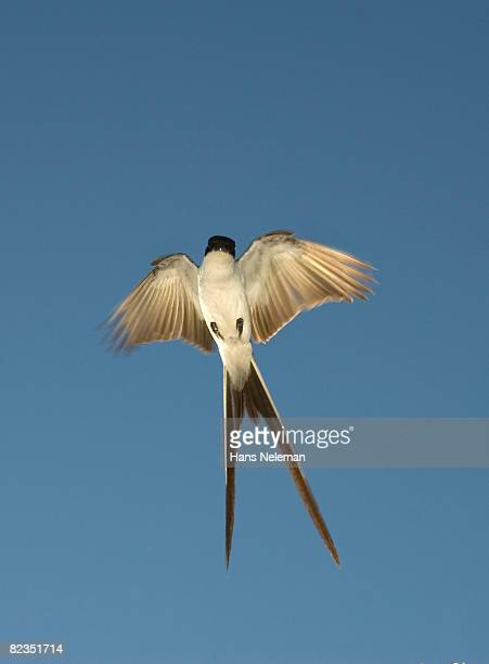 Low angle view of a bird flying in the sky, Salto, Uruguay