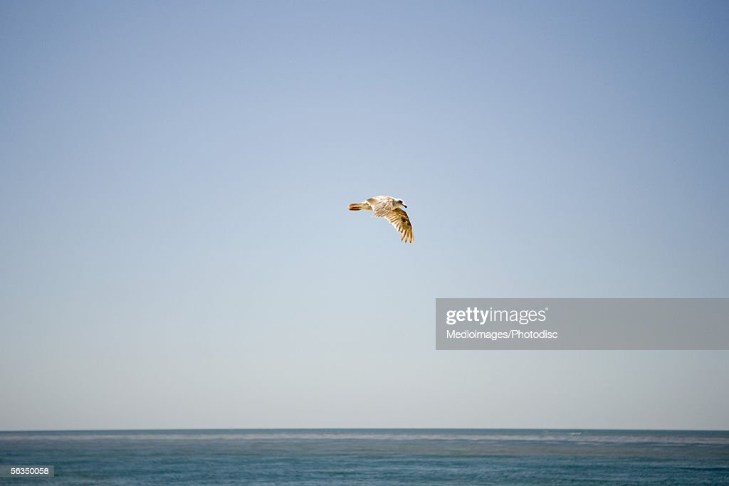Low angle view of a bird flying over the sea, San Diego, California, USA