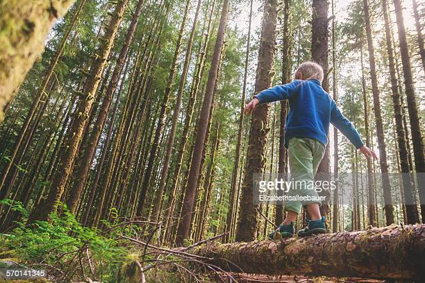 Low angle view of a boy walking across a tree trunk