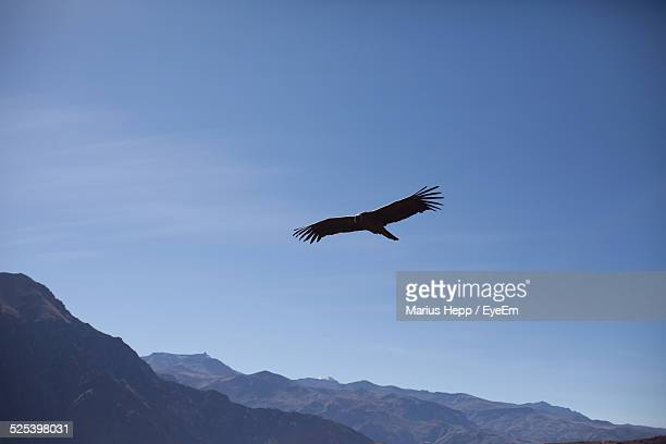 Low Angle View of A Eagle Flying