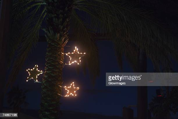 Low angle view of a palm tree lit up at dusk
