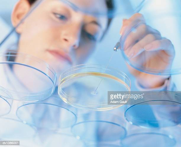Low Angle View of a Woman Examining a Petri Dish