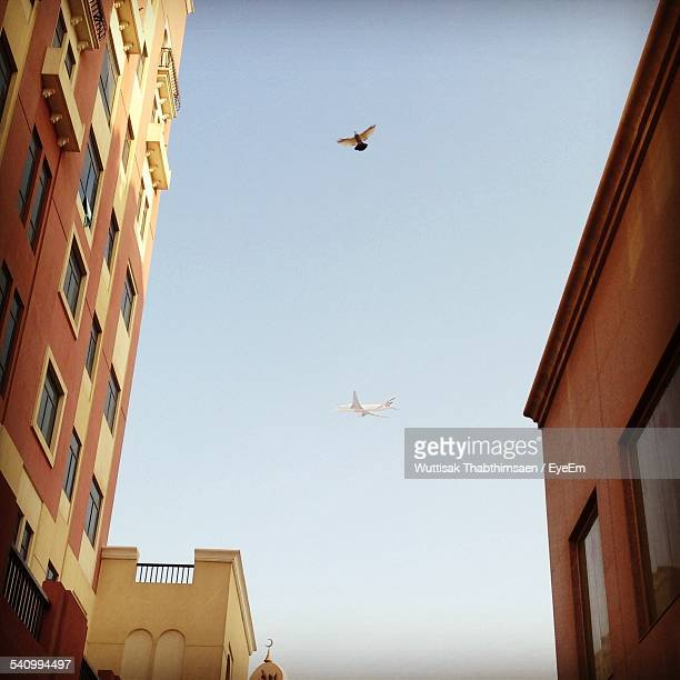 Low Angle View Of Airplane And Bird Flying In City Against Clear Sky