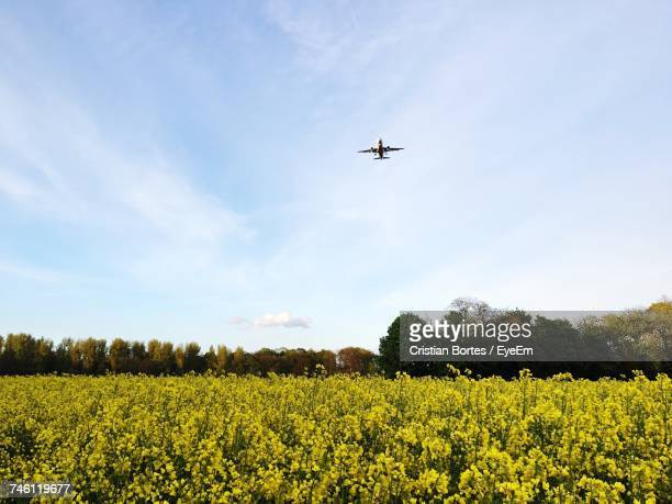 Low Angle View Of Airplane Flying Over Green Landscape Against Sky During Sunny Day