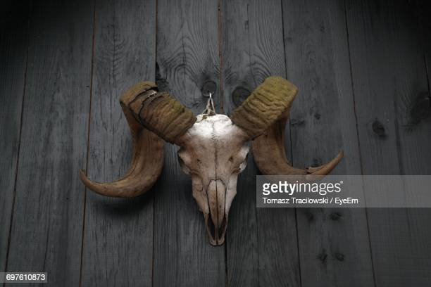 Low Angle View Of Animal Skull Hanging From Wooden Wall