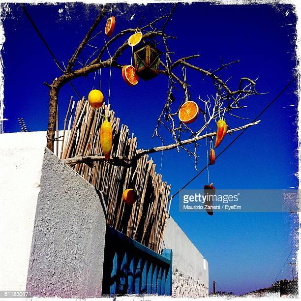 Low angle view of artificial fruits hanging on branch against blue sky