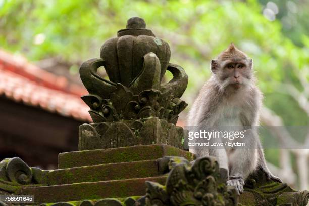 Low Angle View Of Balinese Long-Tailed Monkey By Sculpture At Monkey Forest Sanctuary