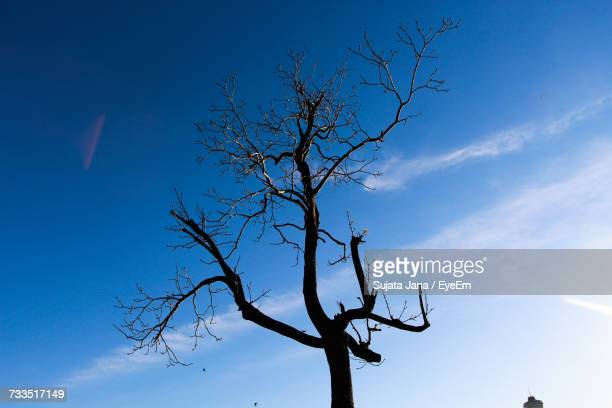 Low Angle View Of Bare Tree Against Blue Sky During Sunny Day