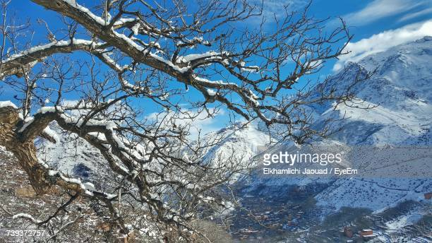 Low Angle View Of Bare Tree Against Mountain