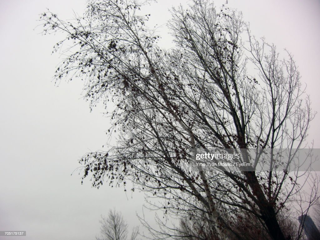 Low Angle View Of Bare Trees Against Sky : Stock-Foto