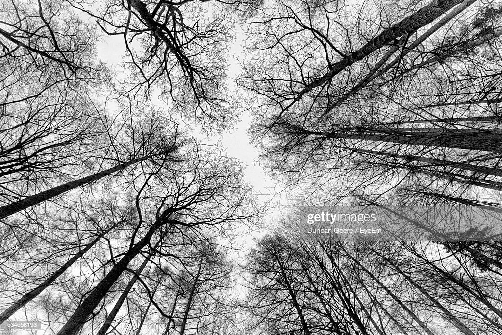 Low Angle View Of Bare Trees In Forest Against Clear Sky