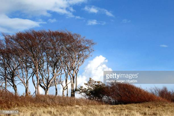 Low Angle View Of Bare Trees On Field Against Sky