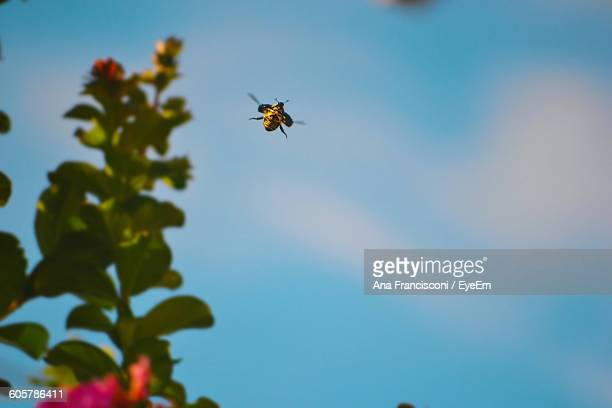 Low Angle View Of Bee Flying Over Plant Against Sky
