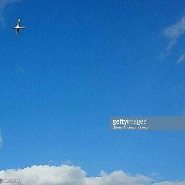Low Angle View Of Bird Against Blue Sky