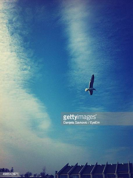 Low angle view of bird in flight against blue sky