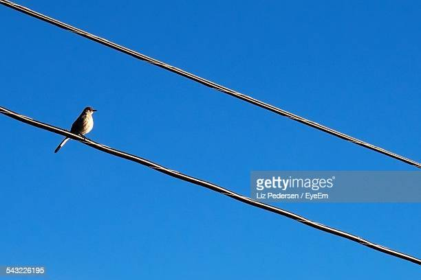 Low Angle View Of Bird On Power Line Against Clear Blue Sky