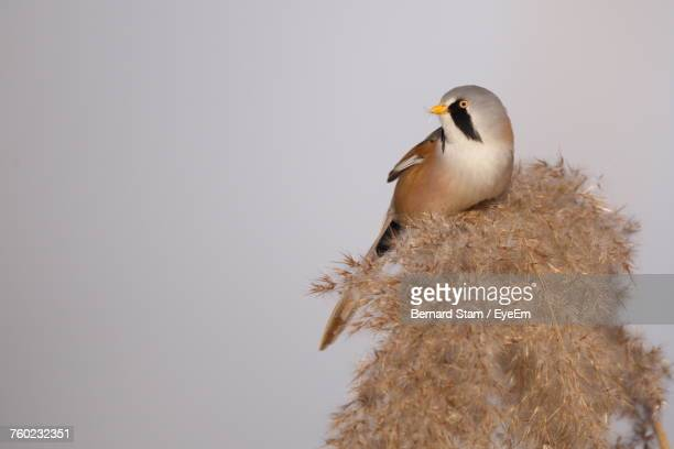 Low Angle View Of Bird Perching On Plant Against Clear Sky