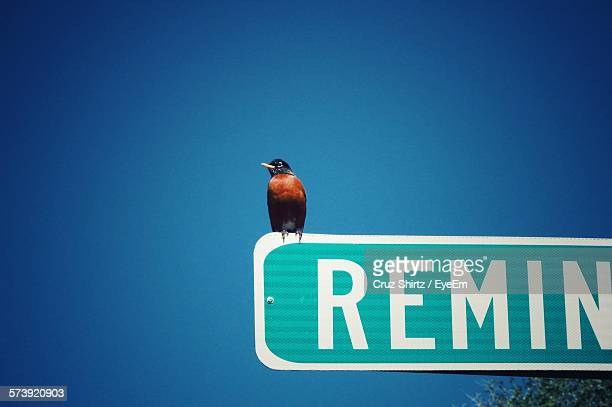 Low Angle View Of Bird Perching On Sign Board Against Clear Sky