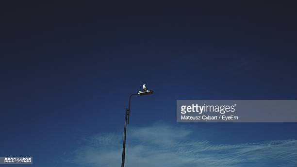 Low Angle View Of Bird Perching On Street Light Against Blue Sky