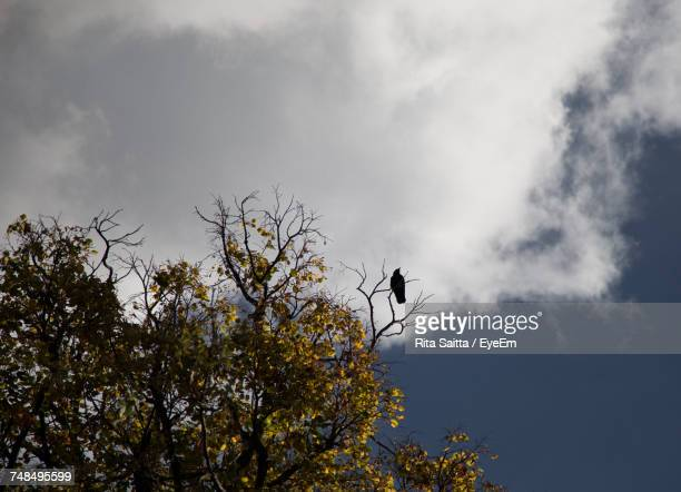 Low Angle View Of Bird Perching On Twig Against Sky