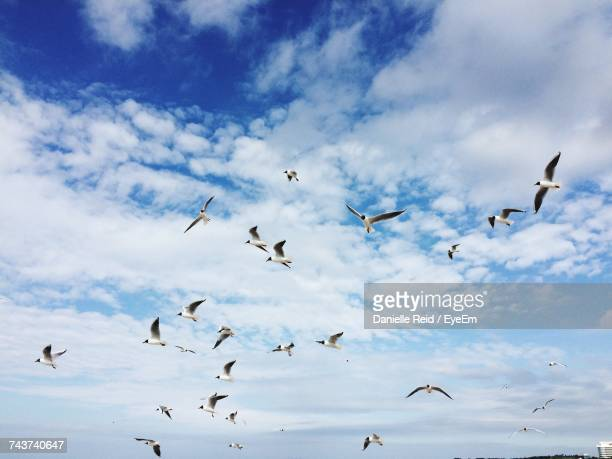 Low Angle View Of Birds Flying Against Cloudy Sky