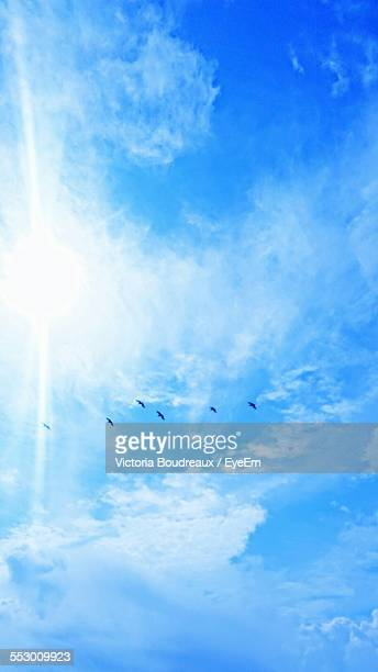 Low Angle View Of Birds Flying In Sky Against