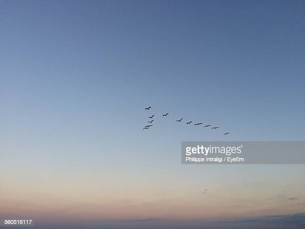 Low Angle View Of Birds Flying In V-Formation During Sunset