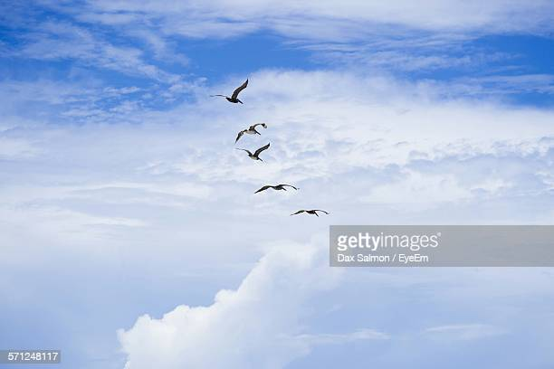 Low Angle View Of Birds Flying On Sky