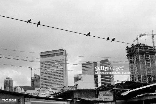 Low Angle View Of Birds In City Against Sky