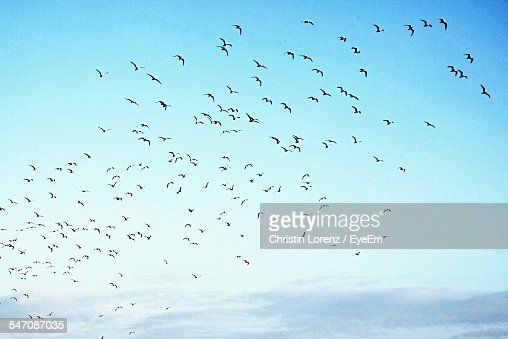 Low Angle View Of Birds In Flight Against Blue Sky