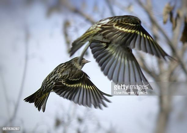 Low Angle View Of Birds In Flight