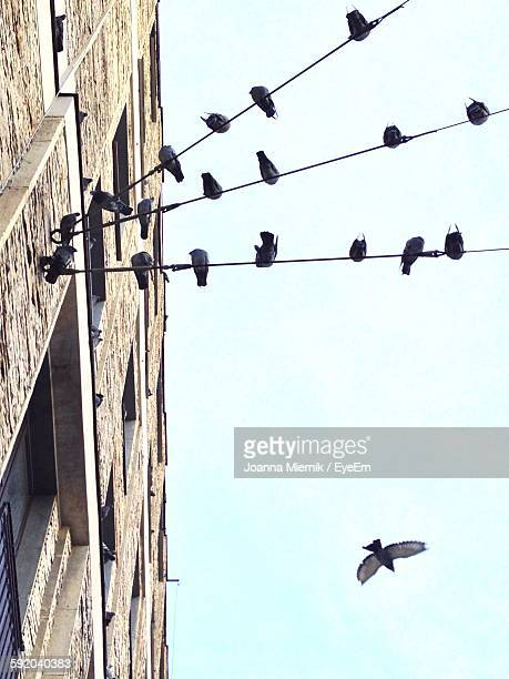 Low Angle View Of Birds Perching On Cable By Building Against Sky