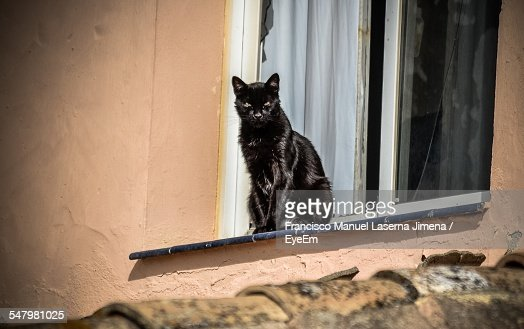 Brown Cat Sleeping On Window Sill Stock Photo   Getty Images